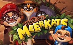 Meet the Meerkats Slot - Play Free Push Gaming Slots Online